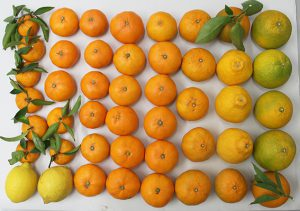 柑橘セット(九州有機)S