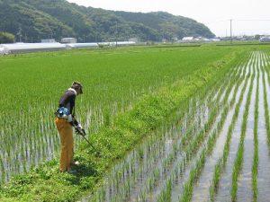 高生連から米便り2