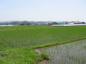 高生連から米便り3