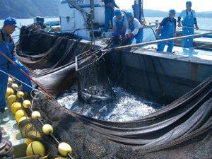 輪島の刀祢沖〆の水揚げ風景